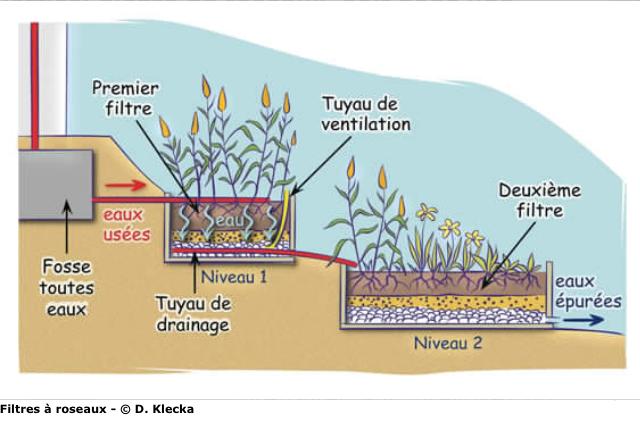 Schéma d'une phytoépuration