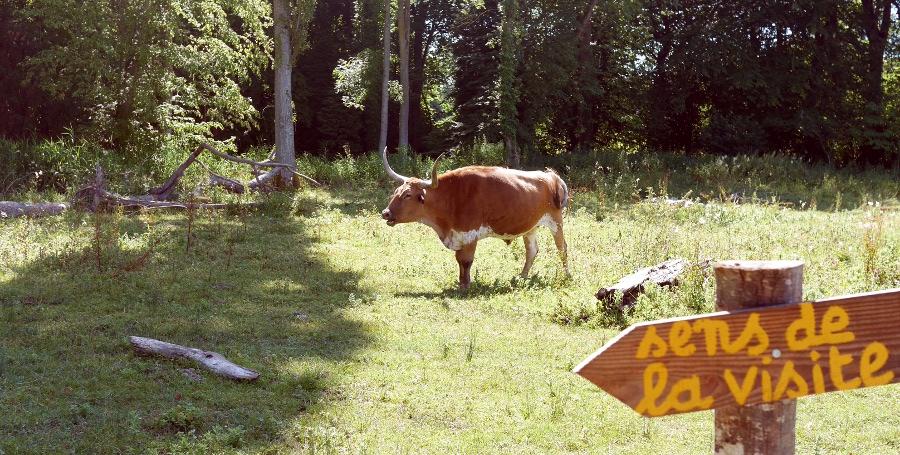 Une vache et un panneau
