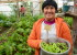 Rosita, SIPAM Farmer, Island of Chiloe, Ancud, Chili