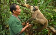 Singe Amazonie, Shayari. Equateur