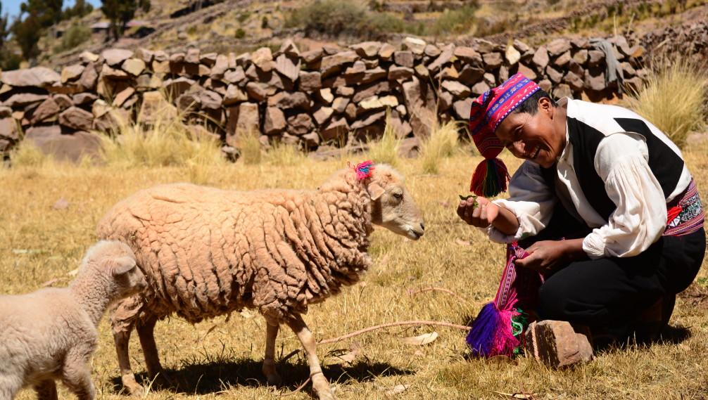 Moutons sur l'ile de Taquile