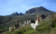 Cultura Rural Patagonica, Bariloche, Argentina