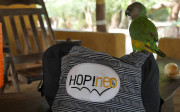 Coco le perroquet aime Hopineo