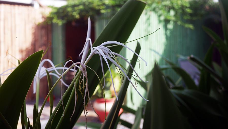 Nature Chez Delphy
