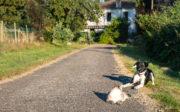 animaux mini-ferme Oasis Sud Gironde